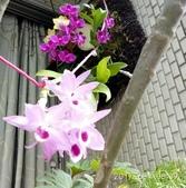花草、果菜、鳥雀:2017.06.04-02