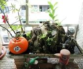 花草、果菜、鳥雀:2016.08.27
