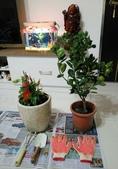 花草、果菜、鳥雀:2016.12.18-02