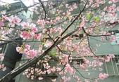 花草、果菜、鳥雀:2017.04.17-03