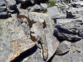 南湖南峰-巴巴山:P7240284.jpg