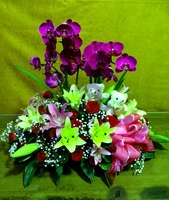 蝴蝶蘭小熊百合玫瑰盆花花束設計 - 盆花