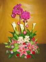 蝴蝶蘭海芋百合玫瑰盆花 - 盆花