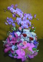 粉蝴蝶蘭白桔梗愛情花粉玫瑰愛心小熊盆花設計 - 盆花
