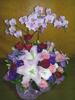 愛情花紫桔梗粉玫瑰紅玫瑰盆花設計 - 盆花