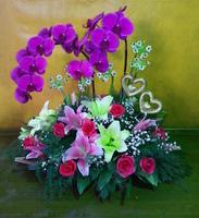 蝴蝶蘭百合伯利恆之星愛心東方之星玫瑰盆花設計 - 盆花