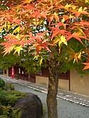 日本之旅 Day4:CIMG7375