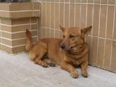 豐山生態園區:顧家的狗狗