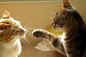 新機試拍貓仔:貓版的心靈捕手