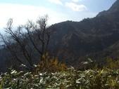 日本之旅 Day3:CIMG7004