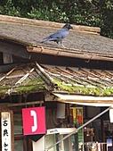 日本之旅 Day4:CIMG7229
