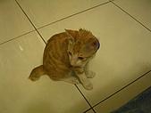 遇見又吉:短尾巴