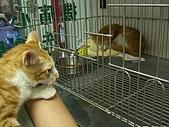 遇見又吉:到醫院, 看到很像自己的貓貓