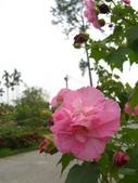 豐山生態園區:CIMG1503