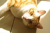 新機試拍貓仔:陽光下的又吉