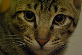 新機試拍貓仔:貓視眈眈