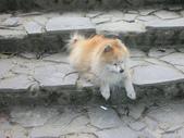 寵物狗仔:打盹的吉米  (狐狸豬)