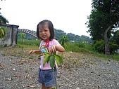 20060930新化老街:這植物有刺