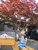 20060728北海道:125這裏楓葉紅了,我又在吃冰淇淋.jpg