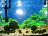 20060728北海道:097只有乾淨的水才能自然長成圓形的水藻.jpg