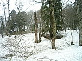 20070423立山黑部:延路的雪愈堆愈厚
