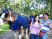 20060728北海道:098北國馬牧場坐馬車.jpg
