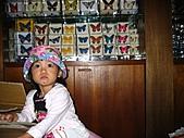 20060901小寶寶遊油車寮:好多蝴蝶