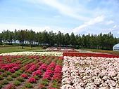 20060728北海道:044彩色花田.jpg