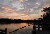 2015-04-06 天鵝湖餵魚:天鵝湖餵魚  08.jpg