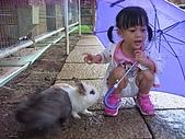 20070619慶端午:這是我的雨傘不能吃啦