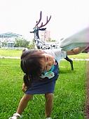 20070610雨天白河:噫,是瓢蟲耶