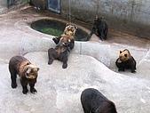 20060728北海道:107這裡的熊會討東西吃喔.jpg