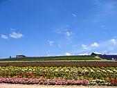 20060728北海道:049很漂亮的花田山丘.jpg