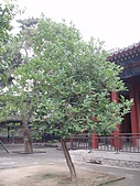20090826北京篇:北京篇109.jpg