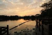 2015-04-06 天鵝湖餵魚:天鵝湖餵魚  02.jpg