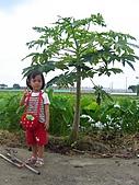 20070506白河半日:木瓜樹耶
