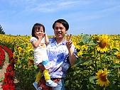 20060728北海道:036向日葵,日本人稱為太陽花.jpg