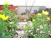 20060402 澎湖三日遊:澎湖三日遊 075.jpg