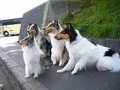 20060728北海道:121漂亮的狗狗,是真的喔.jpg