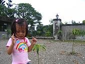 20060930新化老街:這是啥植物呀?