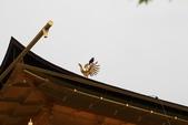 20120704 京阪神奈八日自由行(III-金閣寺):金閣寺 15.jpg