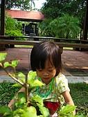 20060819鄉景莊園:這裏有蝌蚪說