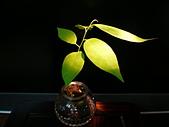 種子盆栽:P1020706.JPG