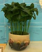 種子盆栽:20110708132.jpg