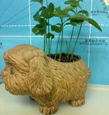 種子盆栽:20110708129.jpg