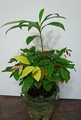種子盆栽:P1020821.jpg