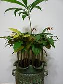 種子盆栽:P1020820.JPG