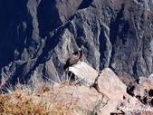 Peru:PB293445.jpg