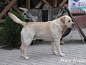 2009 露天博物館@Cappadocia(土耳其):餐廳的店狗