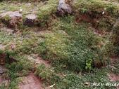 Peru:PC103981.jpg